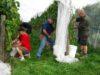 wine-trail-wine-harvest-justthesizzle